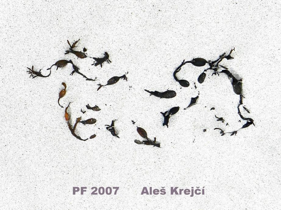 pf-2007
