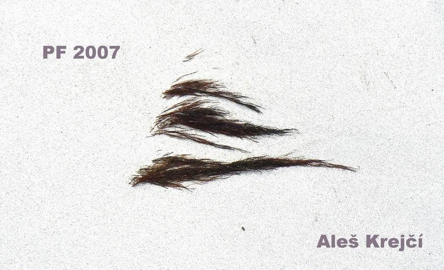 pf-zen-2007