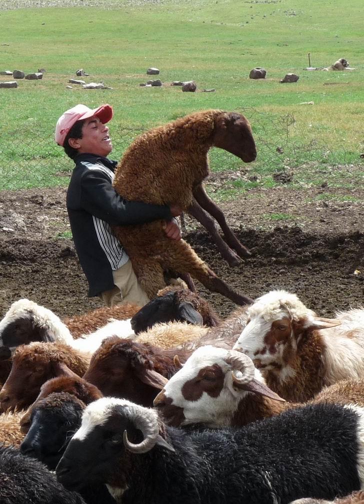 pastevci-armenie