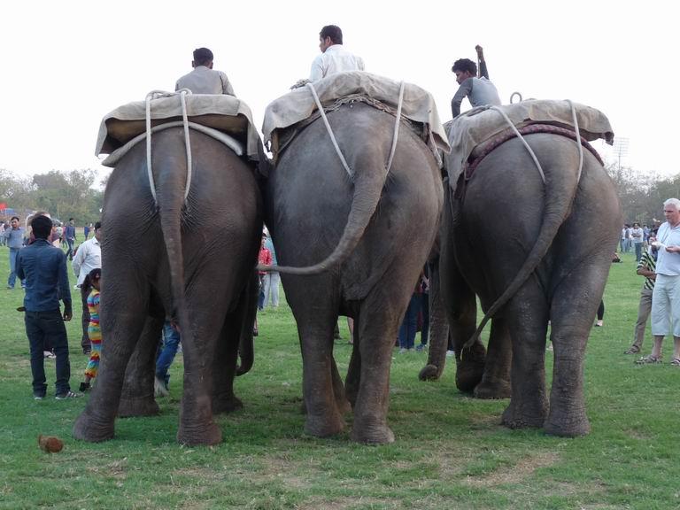 sloni-dzajpur-indie